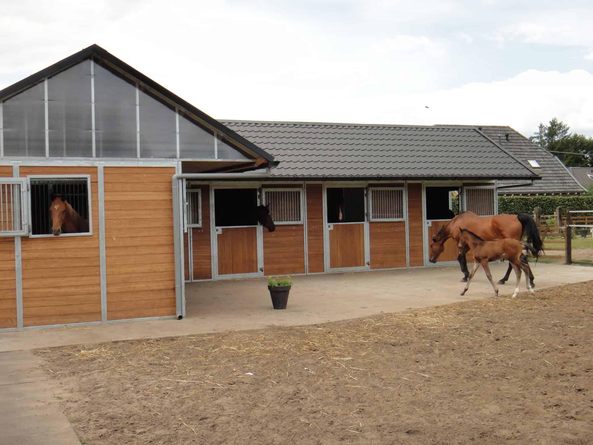 Paardenbox hout