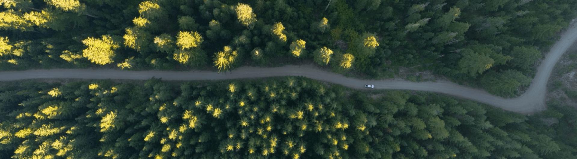 duurzaam bos